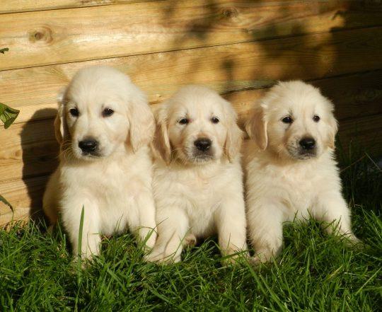 aantal interessante weetjes over honden