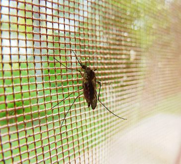 Eerste hulp bij het verjagen van muggen
