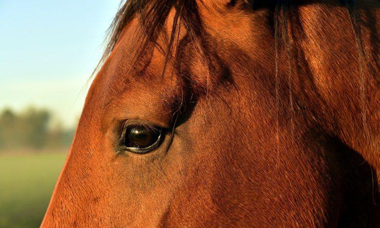 eigen paard houden